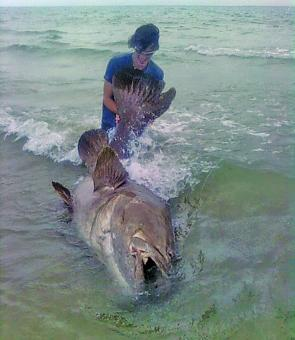 This groper, that took a bait meant for a GT, gave the angler hell before being released still full of fight.
