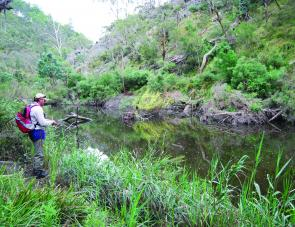 This June long weekend will be your last chance to target trout in the local rivers and streams. Steep sections such as this one on the Coxs River receive very little fishing pressure.