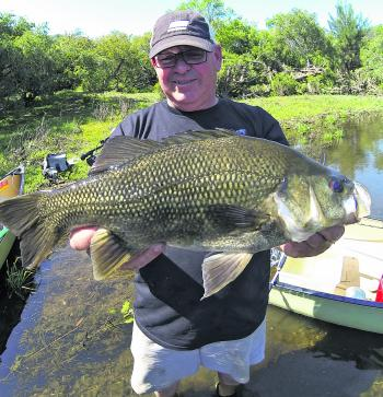At 49cm fork length, fish like this one are a goal for many bass anglers