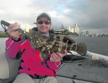 Estuary cod will often turn up when targeting jacks.