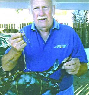 Reg enticed this lump of a Graham Creek mud crab into his pot with a fish frame.