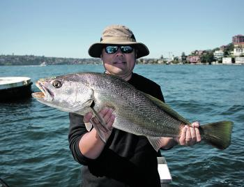 School mulloway are commonly found around structure.