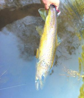The Emu River is a great trout destination in March – soft plastics and fly are top methods.