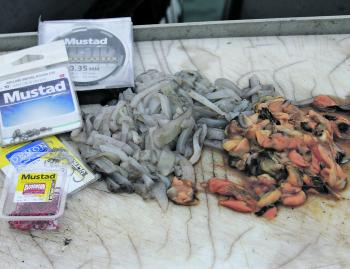 Good tackle and fresh baits are the keys to success for any species within the port.