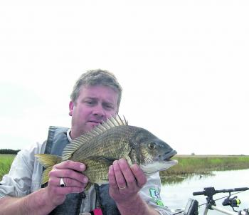 A solid bream taken near the river mouth of the Curdies River on greyback minnow.