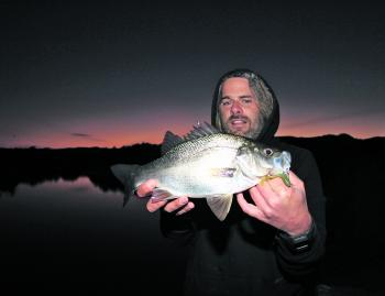 "Daniel took this fat estuary perch from the Barham River on a 2"" Dragon Maggot soft plastic lure."