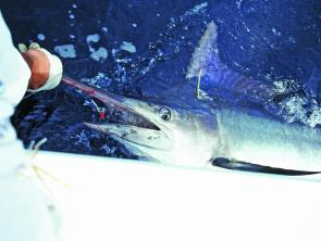 Billfish numbers have been great this summer so far. February should also see some hot action for small blacks.