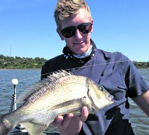 Yellowfin bream are available in all the local estuaries at present.