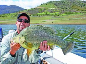 The author with a 630mm golden perch he caught while guiding trip at Blowering Dam recently. The fish fell for a slow rolled Ecogear Grass Minnow in watermelon colour. The goldens will slow down a little this month.