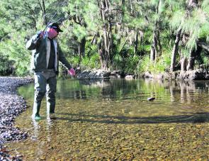 The trout season is progressing well with plenty of options available. The Turon River should hopefully hold water all season, giving the fish the opportunity to grow.