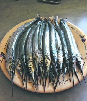 Some spectacular garfish ready for the table.