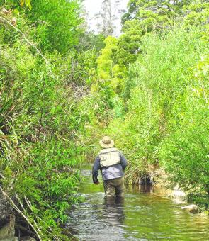 Short rods and short cast are the order of the day in small creeks.