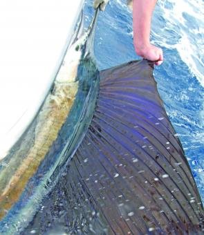 Sailfish are around the Sunshine Coast in February so give them a shot.
