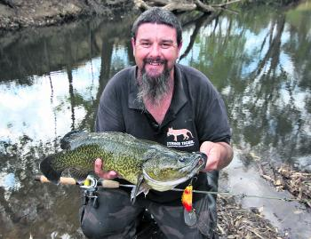 A lovely dark clear water Murray cod caught just upstream of Wangaratta on a Wilson Slickback lure last season.