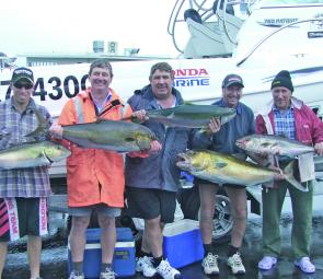 A good bunch of amberjacks and kingfish caught fishing around the 35-fathom line.