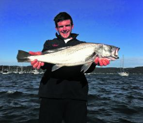 Jewfish have been abundant in Pittwater lately.
