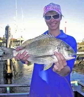 Excellent bream call the Coffs Marina home. This one was caught on a prawn by Nezzie Gaden.