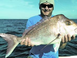 Reds may be on the cuttlies, but plastics fished a bit deeper will get results too.