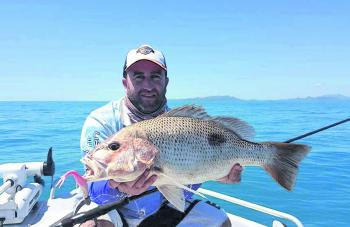 Working large soft plastic shads over inshore rocks and reef is a great way to catch golden snapper like this solid fish Jock Craig recently boated.