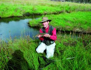 Ebor streams are currently well stocked with fat rainbows like the one the author is holding
