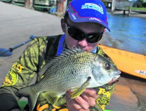 This bream was caught on a TT Switchblade while fishing a rock wall.