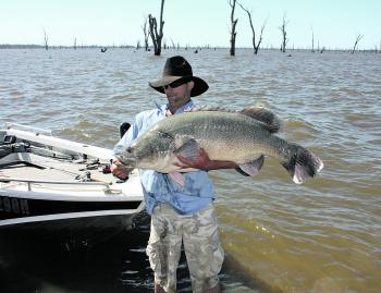 Chas Bunting with an 119cm Mulwala beast caught in some slightly dirty water before last season's blue-green algae outbreak.