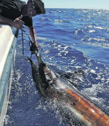 Jimmy Mitchel with a whopper black marlin caught on the 50m lines.
