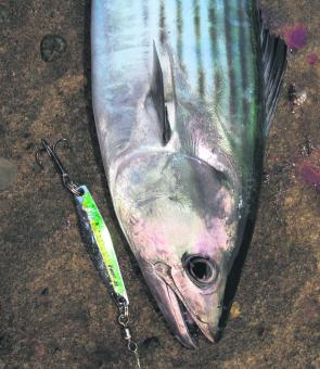 Bonito have been hitting lures at Avoca, Norah Head, Wybung, Snapper Point and Catherine Hill Bay. If the weather and current remain favourable, they'll still be around this month.