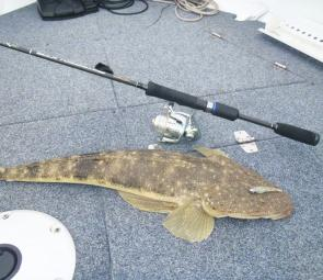 "This flathead took a Gulp 2"" Shrimp that had S Factor applied to it."