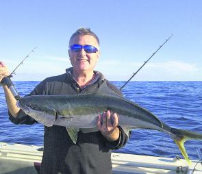 A healthy Allmark yellowtail kingfish.