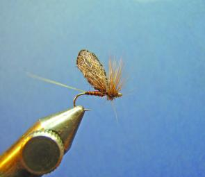 Now clip the hackle flat with the underside of the hook as shown, this makes the fly sit flat in the water's surface. (Optional depending on personnel preference).