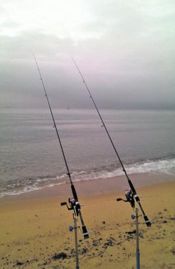 Fishing from the beaches and rocks has been very productive, especially evenings and after dark.