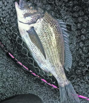A 37.5 TTF Derwent bream nailed the Black Flame Cranka Vibe on the pylons in the lower river