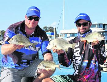 A couple of bream from a recent tournament. These fish were caught throwing crankbaits and surface lures in the shallows around Mcleay Island.