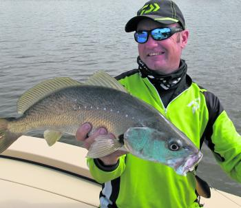 Mulloway will sometimes get in on the madness and chase bait in drains.
