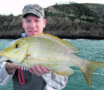 A whopper gold spot cod from Stanage Bay.