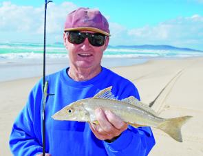 Some nice whiting will be moving onto the beaches over coming weeks but remember to keep count of your beach worms.