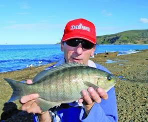 - Plenty of blackfish can be caught around our rocks. Although most are caught by experienced anglers drifting cabbage baits under floats, they will also take white bread baits with enthusiasm.
