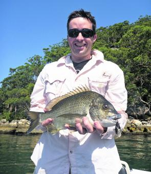 Big bream, which were gorging on cicadas in the upper tidal limits of the Hawkesbury's tributaries in summer, can now be found feeding on the rock walls in the river proper.