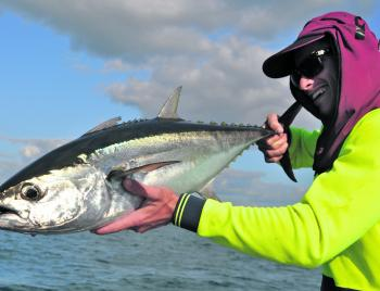 The record books say longtail tuna used to show up regularly around Montague Island.