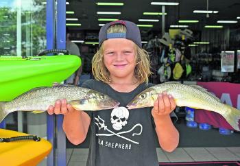 Young Moses Casaubon won the $50 Davo's Fish of the Week prize with these quality whiting from Weyba Creek.