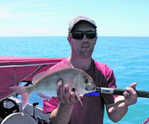 Horsham angler Daniel Pilgrim with a typical Limestone coast pinkie snapper.