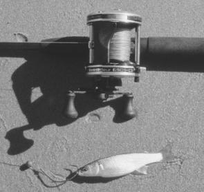 An ideal set up for chasing jacks with livebait: a sturdy rod, solid reel and live mullet readily rigged.