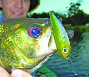 Aussie bass smash stickbaits and this one slammed a Lucky Craft Sammy in an urban waterway in Brisbane's southern suburbs. You just never know what you'll find in waterways these days!