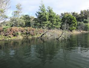 A typical bank and bream holding tree snag on the Scamander River.