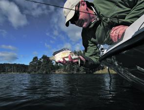 Simon Hedditch lifts a small lure-caught bream from the water.