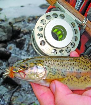 Small streams are hot in November, and if you are keen some wild rainbows can be found.