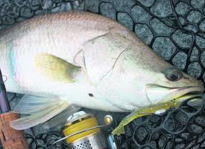 Anywhere from the Mary River north, you should expect plenty of barra when switch baiting the creeks. Image by www.fishingtownsville.net