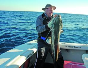 Cobia are very tricky fish with a curious nature, which has seen the undoing of many anglers.