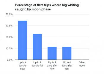 Percentage of flats trips where big whiting were caught, by moon phase.